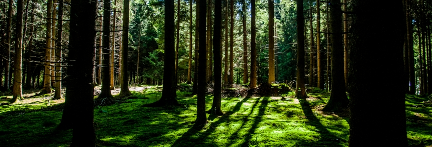 Managing your forest